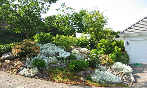 1000 images about xeriscape on pinterest xeriscaping for Xeriscape garden designs