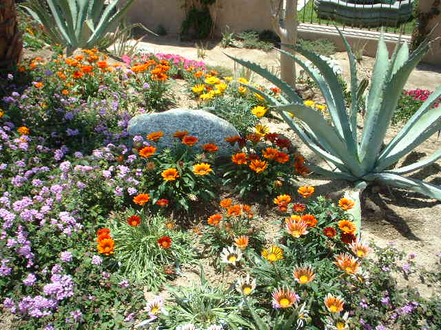 images about Xeriscape on Pinterest Xeriscaping